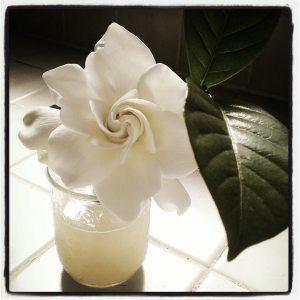Gardenia by Lupe Eyde-Tucker