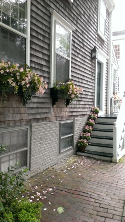 Cedar & blooms