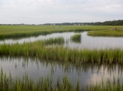 Green marshes of Pawleys Creek.